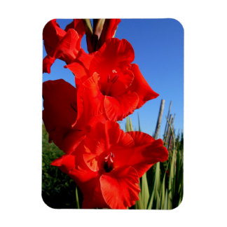 Red Gladiolus And The Blue Sky Magnet