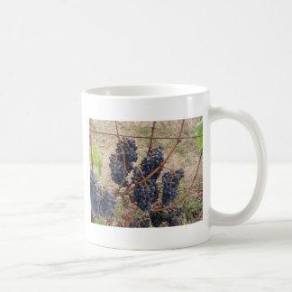 Red grapes on the vine . Tuscany, Italy Coffee Mug