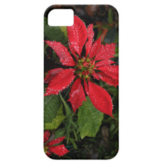Red & Green Christmas Poinsettia iPhone Case Barely There iPhone 5 Case