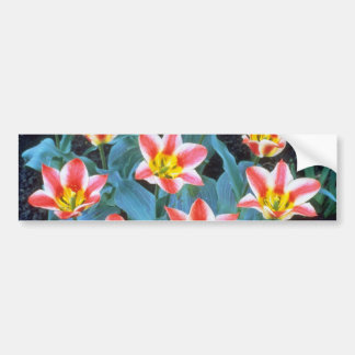 Red Greigee Tulips, 'Addis' flowers Bumper Stickers