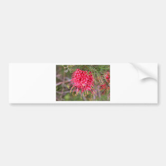 Red grevillea flower in bloom bumper sticker