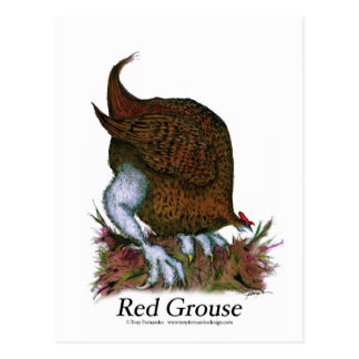Red Grouse bird, tony fernandes Postcard