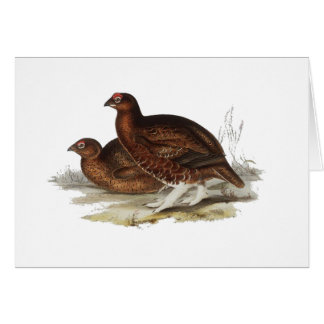 Red Grouse Greeting Card