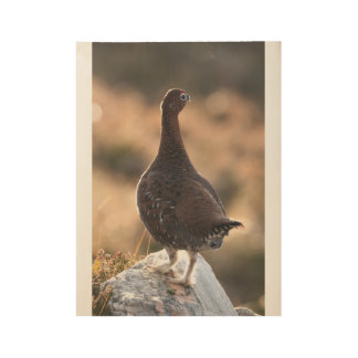 Red grouse wood poster