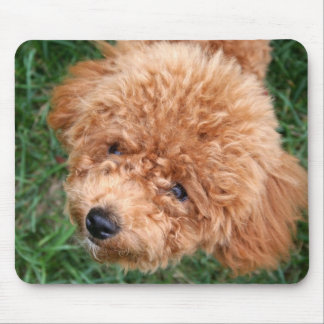 Red Headed Poodle Mouse Pad
