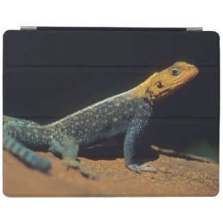 Red-Headed Rock Agama Lizard, El Kerama Ranch iPad Cover