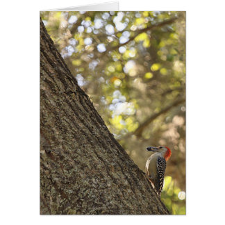 Red Headed Woodpecker Card