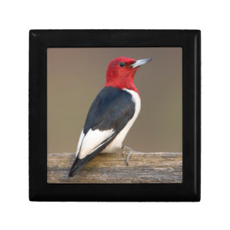 Red-headed Woodpecker on fence Gift Box