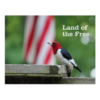 Red-headed Woodpecker Postcard