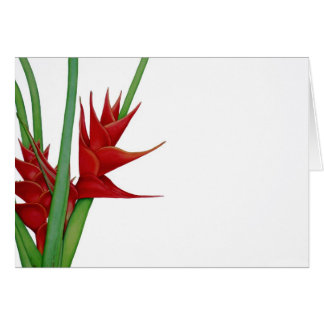 Red Heliconia Watercolour Card