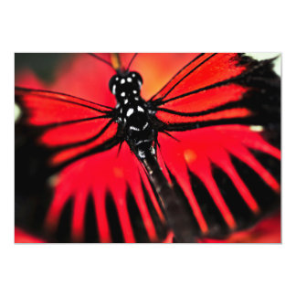 Red heliconius dora butterfly 13 cm x 18 cm invitation card