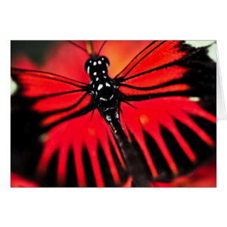 Red heliconius dora butterfly note card