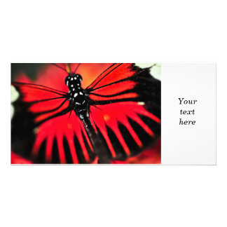 Red heliconius dora butterfly photo card template
