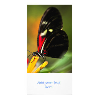 Red heliconius dora butterfly photo greeting card