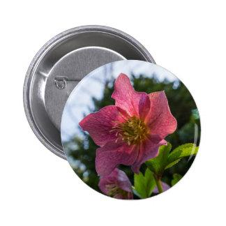 Red Hellebore Flower Button