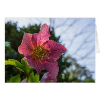 Red Hellebore Flower Horizontal Greeting Card