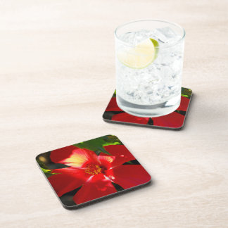 Red Hibiscus Flower in Sunlight Coaster