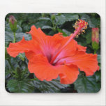 Red Hibiscus flower Mouse Pad