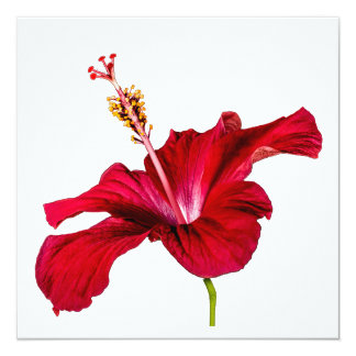 Red Hibiscus Flower Side View 13 Cm X 13 Cm Square Invitation Card