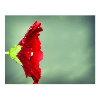 Red Hibiscus flower with droplets Postcard