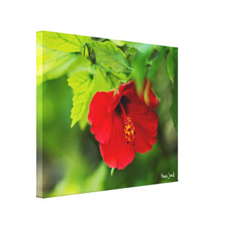 Red Hibiscus Hawaii Tropical Flower Canvas Print
