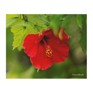 Red Hibiscus Hawaii Tropical Flower Wood Wall Art