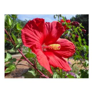 Red Hibiscus Macro Postcard