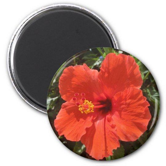 Red hibiscus magnet