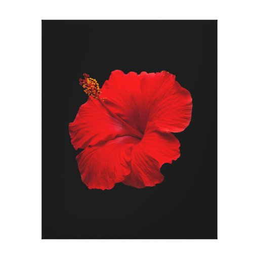Red Hibiscus on Black- Customized Template Gallery Wrap Canvas