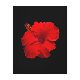 Red Hibiscus on Black- Customized Template Stretched Canvas Prints