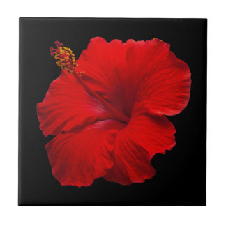 Red Hibiscus on Black - Customized Template Tile
