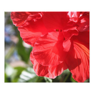 RED HIBISCUS POSTER WALL HANGING PHOTO ART