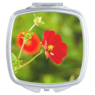 Red Himalayan Cinquefoil Flower Compact Mirror