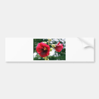 Red Hollyhock flowers in bloom Bumper Sticker