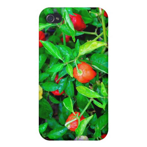 red hot peppers in green leaves case for iPhone 4