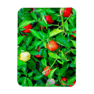 red hot peppers in green leaves magnet