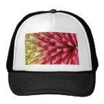 Red hot poker, close-up  flowers hat