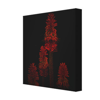 Red Hot Popsicle Plant On Black, Canvas Print