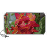 Red Hued Orchids Portable Speakers