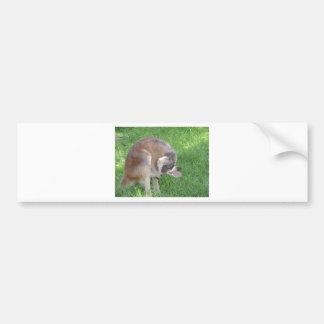 Red Kangaroo Bumper Sticker