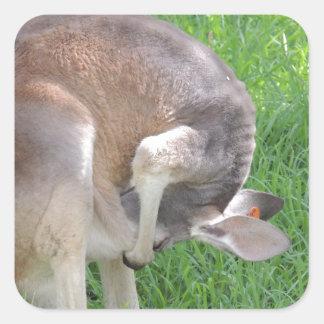 Red Kangaroo Square Sticker