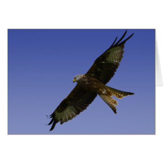 Red Kite  1 Card
