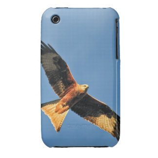 Red Kite Bird of Prey iPhone 3 Cover