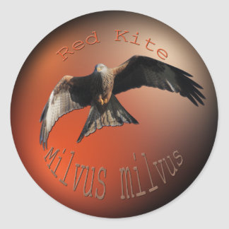 Red Kite Bird of Prey Classic Round Sticker