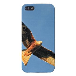 Red Kite Bird of Prey iPhone 5/5S Cases
