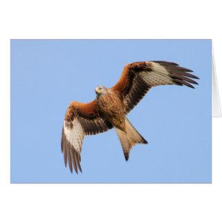 Red Kite Card