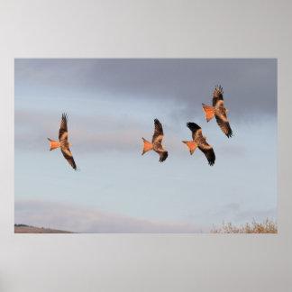 Red Kite Chase Print