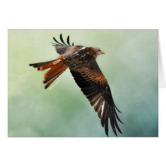 Red Kite in Flight Note Card