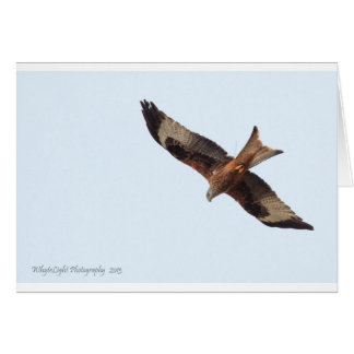 Red Kite In Sky Card