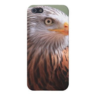 Red Kite  Cover For iPhone 5